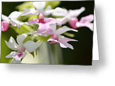 Delicate Orchids By Sharon Cummings Greeting Card
