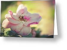 Delicate Petals Greeting Card