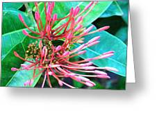 Delicate Pink Flower Greeting Card
