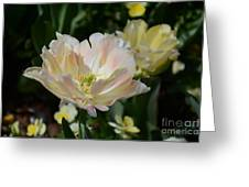 Delicate Pink Tulip 2 Greeting Card