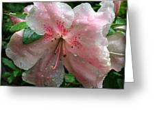 Delicate Pinks In Rain - Flower Photography Greeting Card
