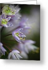 Delicate Purple Flowers Greeting Card