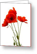 Delicate Red Poppies Vector Greeting Card