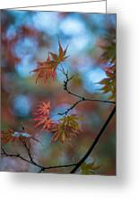 Delicate Signs Of Autumn Greeting Card