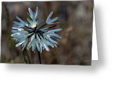 Delicate Silver Wildflower Greeting Card
