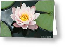 Delicate Waterlily Greeting Card
