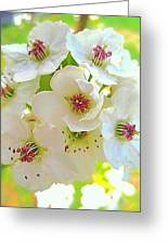Delicate White Blossoms Greeting Card by Beth Akerman