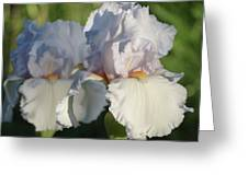 Delicate White Iris Greeting Card
