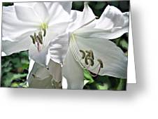 Delicate Whites Greeting Card
