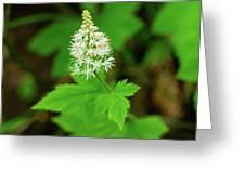 Delicate Wildflower Georgia Mountains Greeting Card