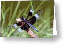 Delicate Wings Of A Dragonfly Greeting Card