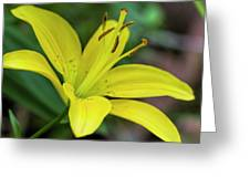 Delicate Yellow Oriental Lily Greeting Card