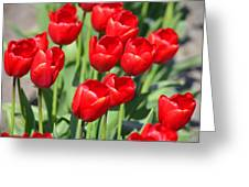 Delicious Tulips Greeting Card