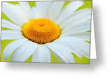 Delightful Daisy Greeting Card