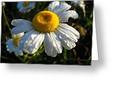 Delightful Dew Drops Greeting Card