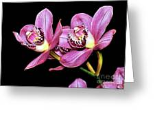 Delightful Orchid Greeting Card