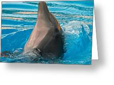 Delphin 2 Greeting Card