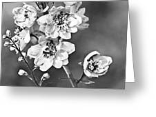 Delphinium Black And White Greeting Card