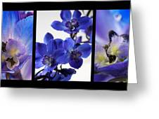 Delphinium Study Greeting Card