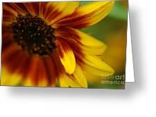 Demure Greeting Card