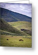 Denali Grizzly Family Greeting Card