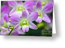 Dendrobium Orchids Greeting Card