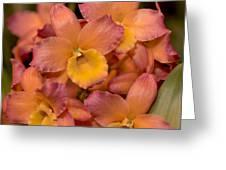 Dendrobium Oriental Smile Greeting Card