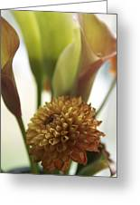 Denmark Close Up Brown Dahlia Greeting Card