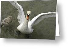 Denmark, Copenhagen Swan Flaps Her Wing Greeting Card