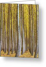 Dense Forest Of Poplar Trees In Boardman Oregon During Fall Greeting Card