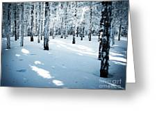 Dense Spruce Snowy Forest Greeting Card