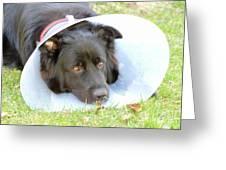 Depressed Dog Greeting Card