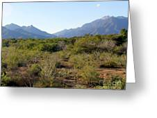Desert And Mountains In Mexico Cabo Pulmo Greeting Card