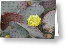 Desert Bloom Greeting Card