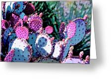 Desert Blush Greeting Card