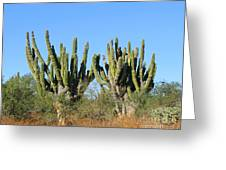 Desert Cacti In Cabo Pulmo Mexico Greeting Card