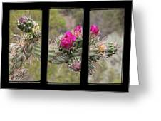 Desert Cactus Triptych Greeting Card