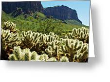 Desert Cholla 1 Greeting Card