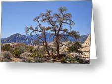 Desert Contrast Greeting Card