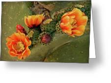Desert Flame Greeting Card