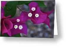 Desert Flower 2 Greeting Card