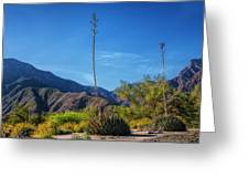 Desert Flowers In The Anza-borrego Desert State Park Greeting Card