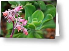 Desert House Blooming Succulent Greeting Card
