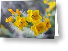 Desert In Bloom Greeting Card