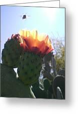 Desert Jewels II Greeting Card