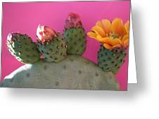 Desert Jewels IIi Greeting Card