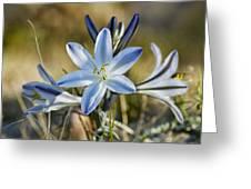 Desert Lily Greeting Card