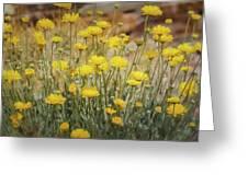 Desert Marigold Bouquet  Greeting Card