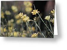 Desert Milkweed Greeting Card