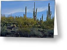 Desert Mule Greeting Card